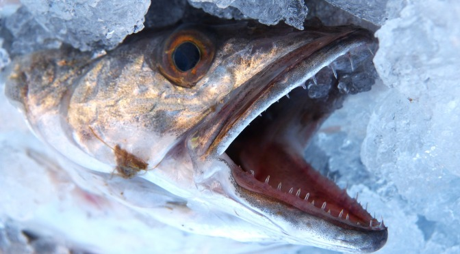 MEDREACT and WWF call on France, Italy and Spain to respect their obligation to  reduce overfishing in the  Western Mediterranean