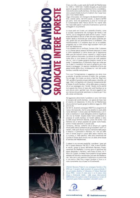MedReact_ARP corallo bamboo